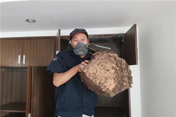大亚湾白蚁防治|信誉保证大亚湾灭白蚁公司