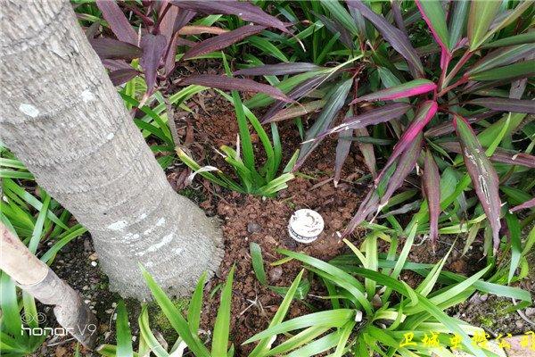 惠阳秋长白蚁防治灭白蚁-对树木及树桩蚁害调查结果分析报告