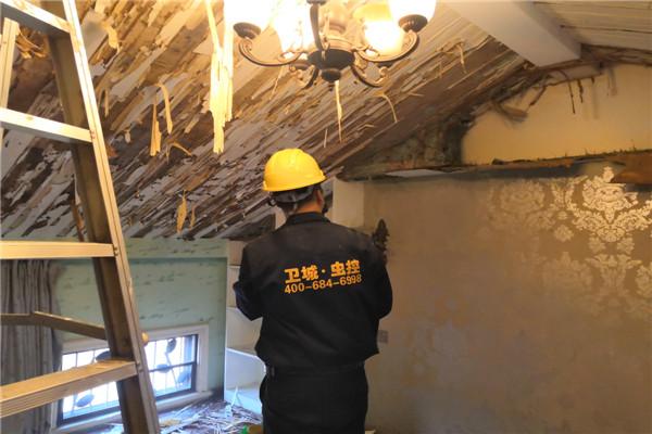 惠城白蚁防治,惠州惠城区家居灭白蚁案例