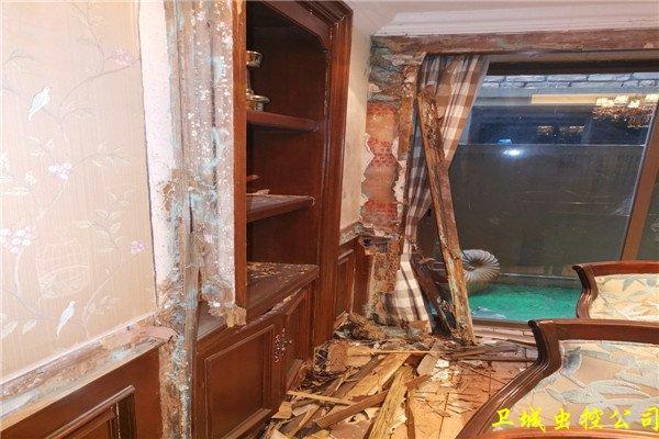 惠阳镇隆白蚁防治_白蚁对人们的衣食住行家具的危害